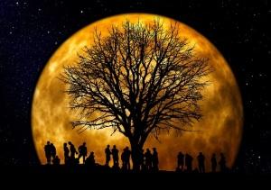 tree-66465_640