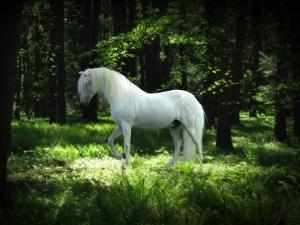 mystical_forest_by_arabiian-d3ilyfs